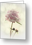 Flower Still Life Prints Greeting Cards - Perfect Peony Greeting Card by Amanda Finan