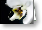 White Digital Art Greeting Cards - Perfection Greeting Card by Barb Pearson
