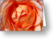 Roses Petals Greeting Cards - Perfection Greeting Card by Elizabeth Hoskinson