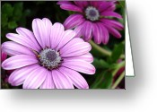 Beautiful Flowers Greeting Cards - Perfectly Paired Greeting Card by Kathy Bucari
