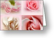 Pink Carnations Greeting Cards - Perfectly Pink Greeting Card by Kathy Bucari