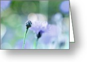 Depth Of Field Greeting Cards - Periwinkle Dreams Greeting Card by Lisa Knechtel