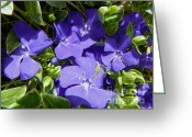 Vinca Flowers Greeting Cards - Periwinkle Vinca Minor - Seasonal Garden Flower Greeting Card by Photography Moments - Sandi