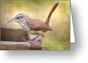 Little Bird Greeting Cards - Perky Little Wren Greeting Card by Bonnie Barry
