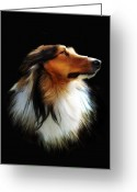 Sheltie Greeting Cards - Persephone Greeting Card by Julie L Hoddinott