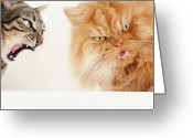 Persian Greeting Cards - Persian Cat And Tabby Cat Greeting Card by Hulya Ozkok