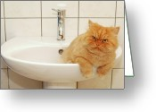 Sink Greeting Cards - Persian Cat In The Sink Greeting Card by Hulya Ozkok
