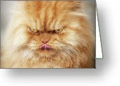 Persian Greeting Cards - Persian Cat Looking Angry Greeting Card by Hulya Ozkok
