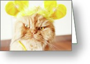 Persian Greeting Cards - Persian Cat With Hair Costume Greeting Card by Hulya Ozkok
