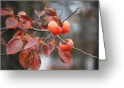 Persimmons Greeting Cards - Persimmons Greeting Card by Carrie OBrien Sibley