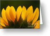 Flower Art Greeting Cards - Petales de Soleil - a01 Greeting Card by Variance Collections