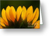 Yellow Flower Digital Art Greeting Cards - Petales de Soleil - a12 Greeting Card by Variance Collections