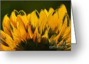 Yellow Flower Digital Art Greeting Cards - Petales de Soleil - a41b Greeting Card by Variance Collections