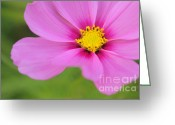 Nature Photograph Greeting Cards - Petaline - p01a Greeting Card by Variance Collections