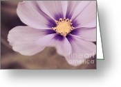 Flower Photography Greeting Cards - Petaline - p04a Greeting Card by Variance Collections