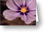 Flower Photography Greeting Cards - Petaline - p04d Greeting Card by Variance Collections