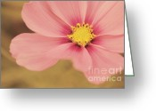 Flower Photography Greeting Cards - Petaline - p05a Greeting Card by Variance Collections