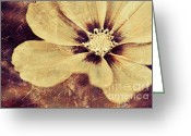 Delicate Mixed Media Greeting Cards - Petaline - t37d03a3 Greeting Card by Variance Collections