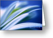 Blue Petals Greeting Cards - Petals in blue Greeting Card by Kristin Kreet