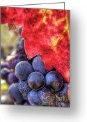 Grapevines Greeting Cards - Petite Syrah 22 Greeting Card by Mars Lasar