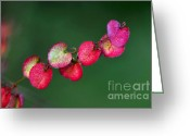 Textured Floral Greeting Cards - Petites feuilles Greeting Card by Kaye Menner