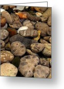Shells Digital Art Greeting Cards - Petoskey Stones with Shells l Greeting Card by Michelle Calkins