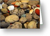 Pebbles Greeting Cards - Petoskey Stones with Shells ll Greeting Card by Michelle Calkins