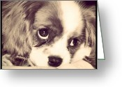 Petstagram Greeting Cards - #petstagram #dog #kingcharlescavalier Greeting Card by Megan Czosek
