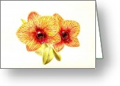 Phalaenopsis Orchid Greeting Cards - Phalaenopsis Orchid Greeting Card by Michael Vigliotti