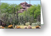 Desert Landscapes Greeting Cards - Phoenix Botanical Garden Greeting Card by Carol Groenen