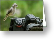 D700 Greeting Cards - Photographers Little Helper Greeting Card by Jim Moore
