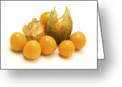 333 Greeting Cards - Physalis  Greeting Card by Fabrizio Troiani