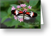 Gossamer Greeting Cards - Piano Key Butterfly on Pink Penta Greeting Card by Sabrina L Ryan