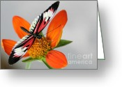 Gossamer Greeting Cards - Piano Key Butterfly Up Close Greeting Card by Sabrina L Ryan