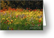 Texas Wildflowers Greeting Cards - Pick Me Greeting Card by Joe JAKE Pratt