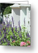 Pink And Purple Greeting Cards - Picket fence and purple flowers Greeting Card by adSpice Studios