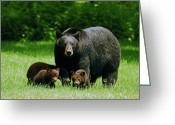 Black Bear Cubs Greeting Cards - Picnic Crashers Greeting Card by Lori Tambakis