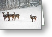 Does. Winter Greeting Cards - Picture Perfect Deer Greeting Card by Aimee L Maher