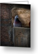 Gargoyle Greeting Cards - Pigeon of the City Greeting Card by Bob Orsillo