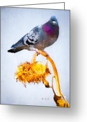 Decorative Art Greeting Cards - Pigeon On Sunflower Greeting Card by Bob Orsillo