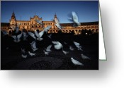 Art In Squares Greeting Cards - Pigeons Flutter Above The Plaza De Greeting Card by Steve Winter
