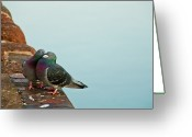 Wild Bird Greeting Cards - Pigeons In Love Greeting Card by Image by J. Parsons