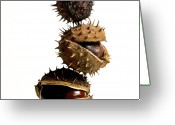 Thorn Greeting Cards - Pile of chestnuts Greeting Card by Bernard Jaubert