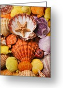 Orange Greeting Cards - Pile of seashells Greeting Card by Garry Gay