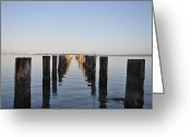 Intercoastal Greeting Cards - Pilings from an Old Pier Greeting Card by Bill Cannon
