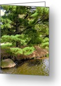 Vertical Painting Greeting Cards - Pine along the Water Greeting Card by Mindy Newman