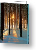 No People Greeting Cards - Pine Forest Greeting Card by www.WM ArtPhoto.se