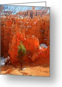 November Sunset Greeting Cards - Pine Hoodoos at Bryce Canyon Greeting Card by Pierre Leclerc