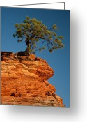 Kaiser Greeting Cards - Pine On Rock Greeting Card by Ralf Kaiser