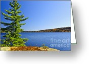 Blue Green Water Greeting Cards - Pine tree at lake shore Greeting Card by Elena Elisseeva